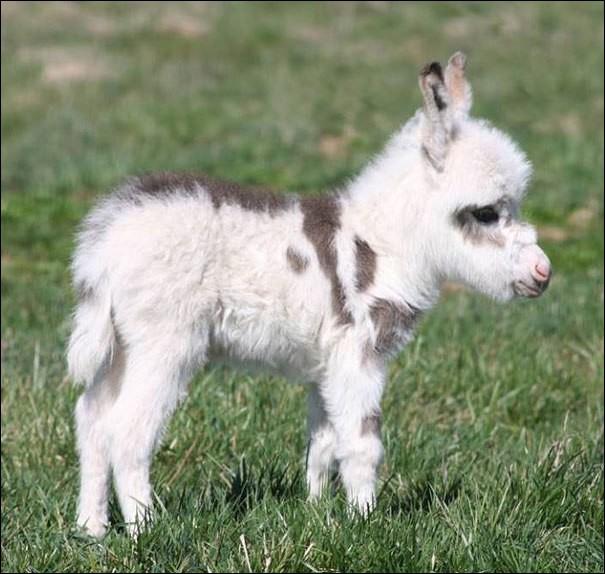 D'après vous, comment appelle-t-on ce petit animal ?