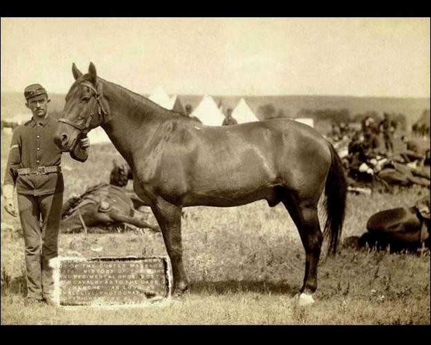"""Custer, en engageant avec témérité le combat, a sacrifié 1/2 de ses hommes (647), massacrés par les Cheyennes et Sioux (1 500 guerriers) rassemblés par Sitting Bull. Dans les contre-attaques de Crazy Horse et Gall, la cavalerie piégée a perdu ses hommes et les Amérindiens ont eu 500 tués.Trouvez cette bataille où ce cheval, nommé Comanche, fut le """"seul survivant du bataillon de Custer""""."""