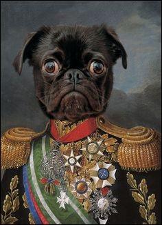 Quel roi actuel a élevé son chien décédé au rang de Maréchal en chef des forces aériennes ?