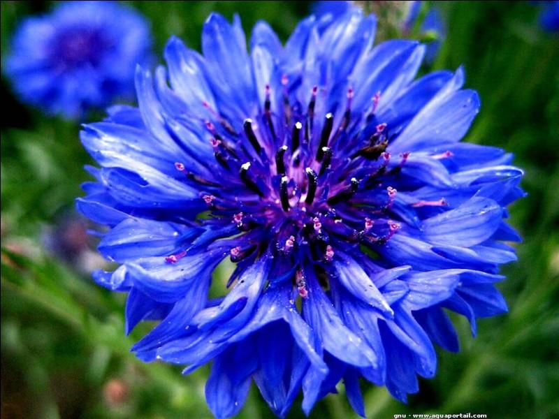 Quelle est sa fleur représentative ?