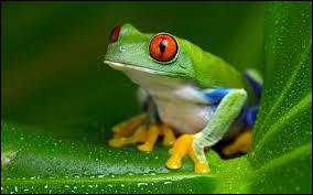 """""""Manger la grenouille"""", c'est..."""