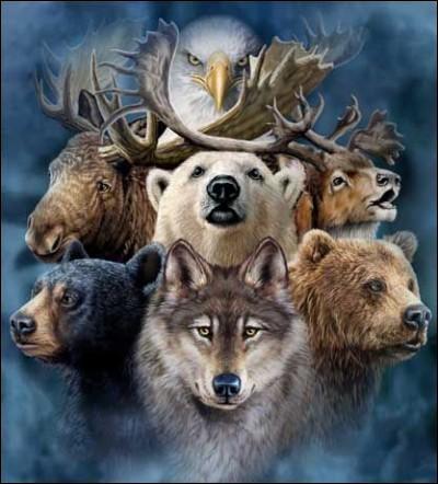 Quel animal aimes-tu ?