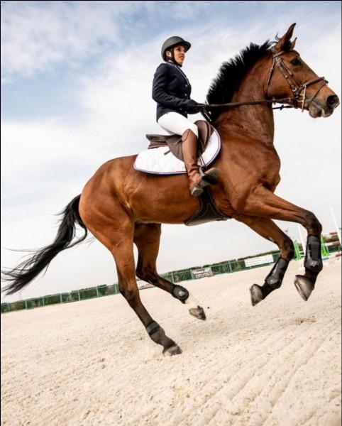 Sur quel pied galope ce cheval ?