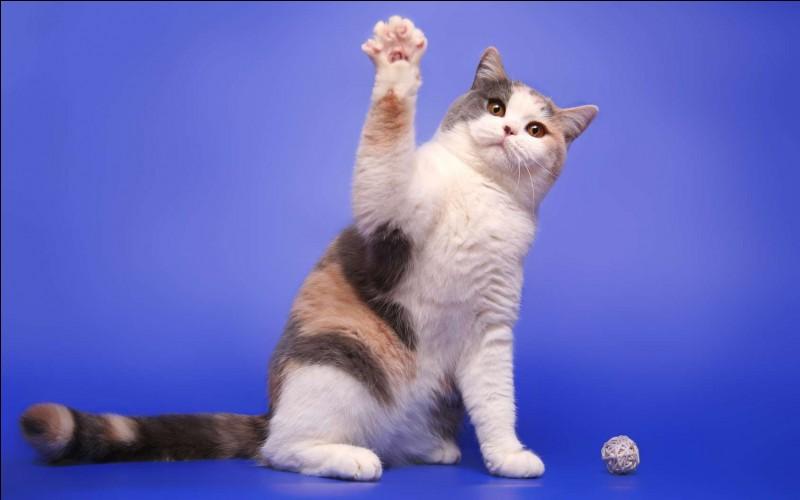Dans une pièce il y a quatre coins, à chaque coin il y a un chat, en face de chaque chat se trouve trois chats . Combien y a-t-il de chats dans la pièce ?