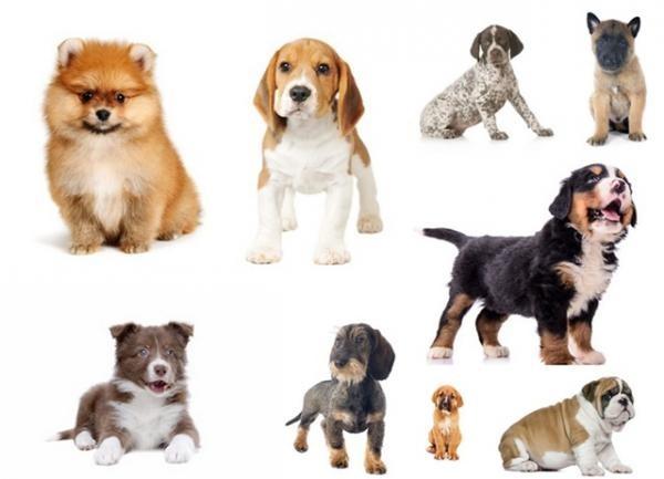 Le grand quiz des chiens