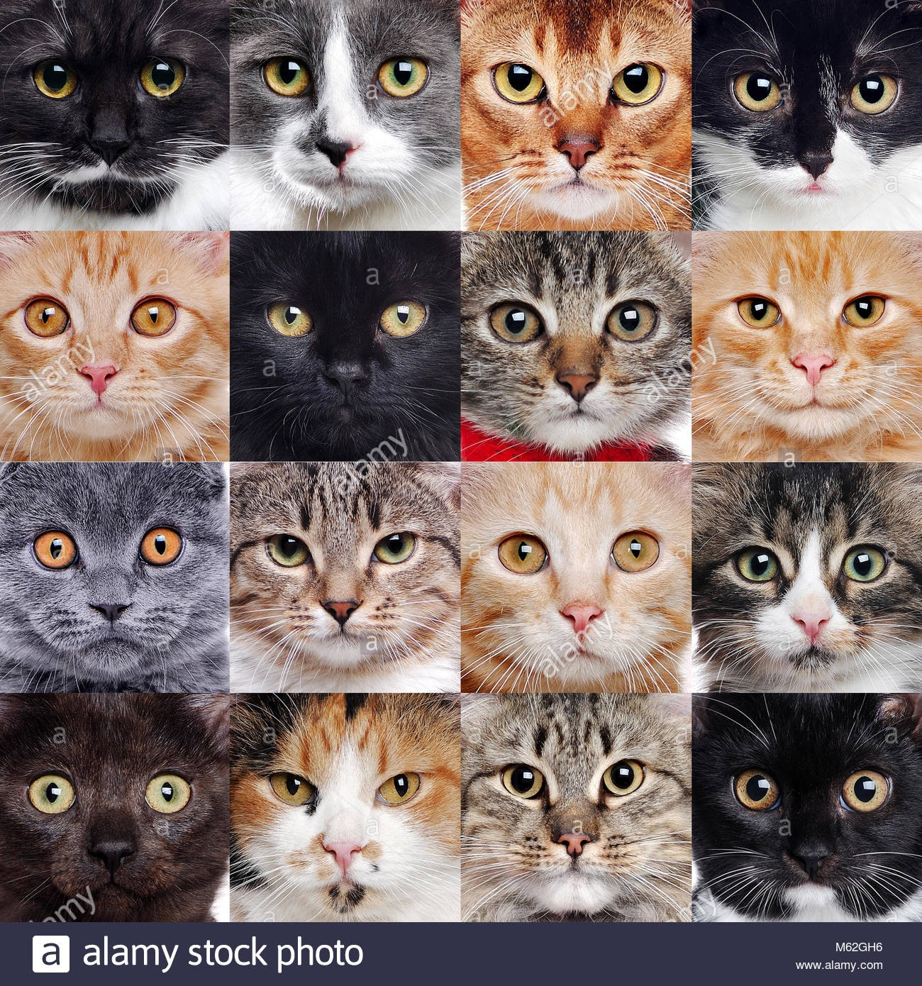 Le grand quiz des chats