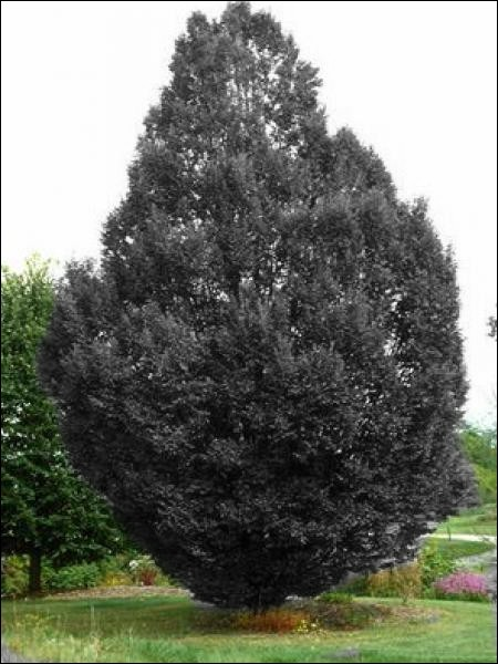 Si vous tombez sous cet arbre, que va-t-il se passer ?