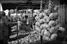 L'ail est utilisé traditionnellement pour ses propriétés...