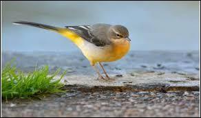 Quelle est cette race d'oiseaux ?