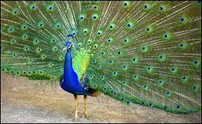 Quel est ce magnifique oiseau ?