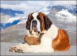 Quelle est la race de ce grand chien de montagne ?