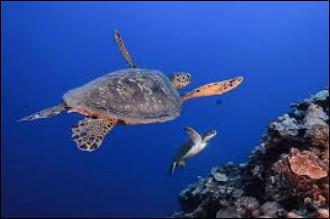 Cette tortues a une carapace multicolore.