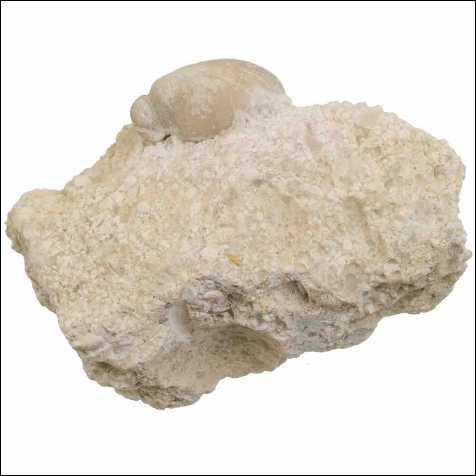 Le calcaire fait monter...