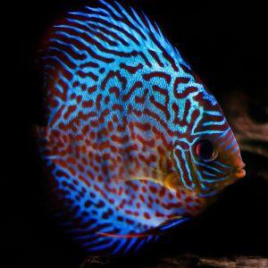 Quizz univers de l'aquariophilie débutant