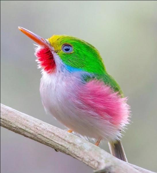 Mignon ce petit oiseau de toutes les couleurs non ?