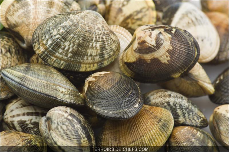 Mais elles vous seront présentées surmontées de nombreux fruits de mer frais dans leurs coquilles !