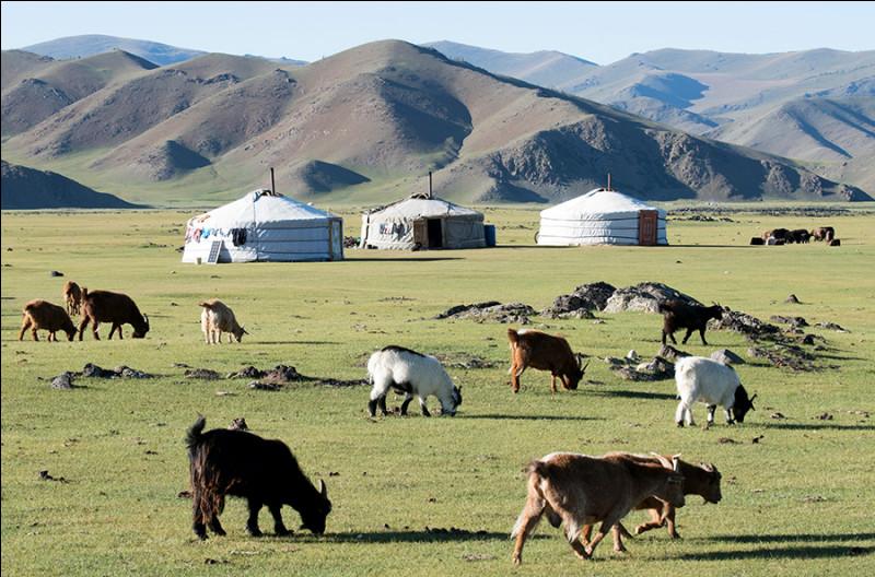 Comment se nomme cet habitat traditionnel des éleveurs nomades de Mongolie ?
