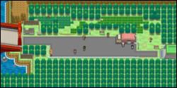 Quel Pokémon pouvons-nous trouver dans la Route 5 de Unys ?