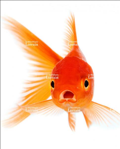 Comment s'appelle le poisson de Geppetto ?