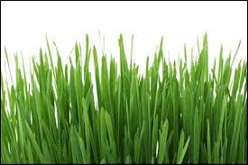 """Que veut dire """"couper l'herbe sous le pied"""" ?"""