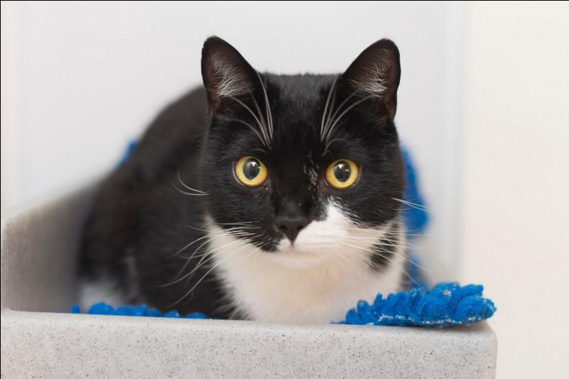 À quel moment, du jour ou de la nuit, un chat voit-il flou de loin et mal de près ?