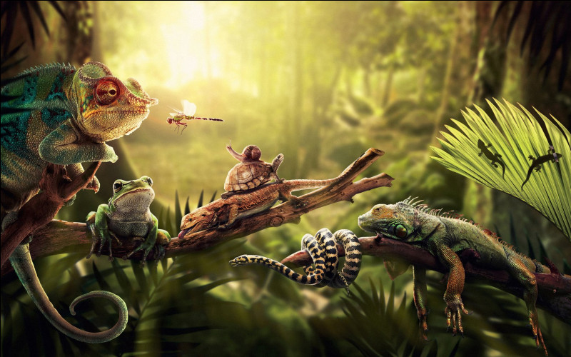 Lequel de ces reptiles peut à la fois guetter ses arrières et chasser ce qui se trouve devant lui tout en restant immobile ?