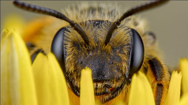 Quelles sont les deux couleurs, outre les ultraviolets, qu'une abeille peut distinguer ?