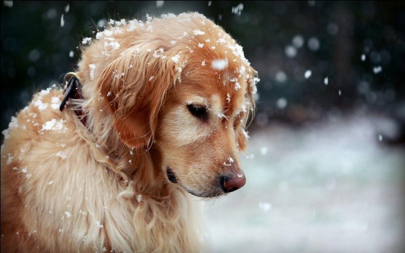 Un chien peut uniquement voir en noir et blanc.