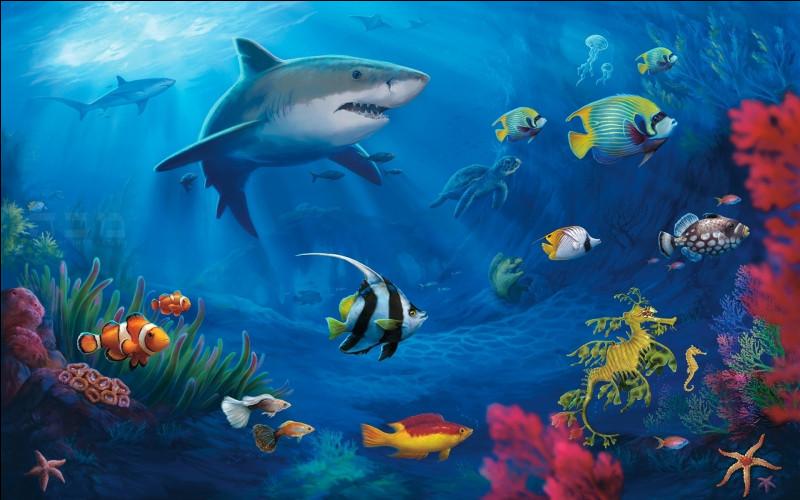 Comme l'animal de la question 2, quel animal marin peut voir par devant et par derrière ?
