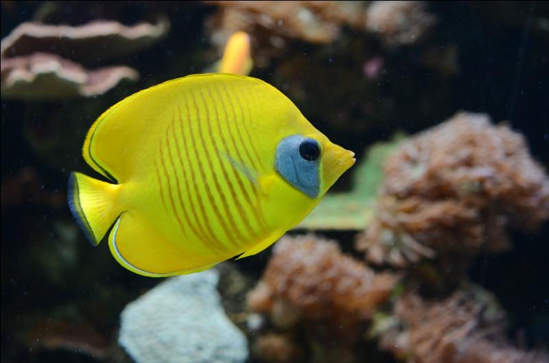 En zoologie, comment appelle-t-on l'étude des poissons et des animaux marins ?