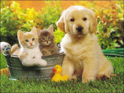 Es-tu un chat ou un chien ?