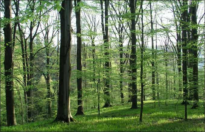 Parmi les bons gestes destinés à préserver la biodiversité, il faudrait n'acheter et n'utiliser que des papiers et des bois issus des forêts gérées durablement, quel est le label indiqué ?