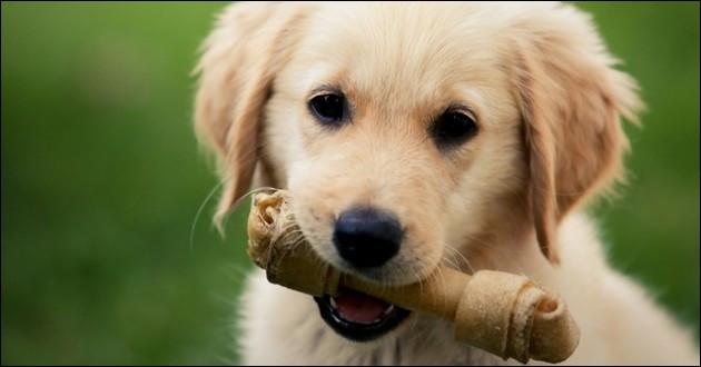Si on te dit d'adopter un chien, tu réponds...