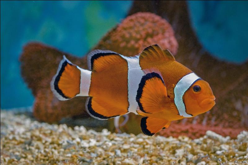 Avril 2020 - Le 1er avril, ce sera le jour des poissons d'avril. On fêtera également la saint ...