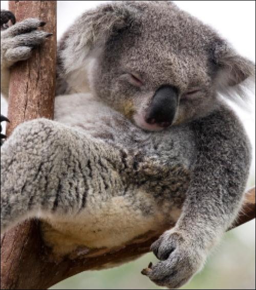 Que se passe-t-il en Tasmanie ?
