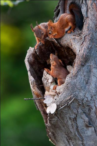 Quel est le nom du bébé écureuil ?