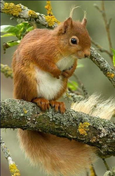 """Selon le livre """"L'Écureuil"""" d'Albert visage, quel cri pousse-t-il quand il est en colère ?"""