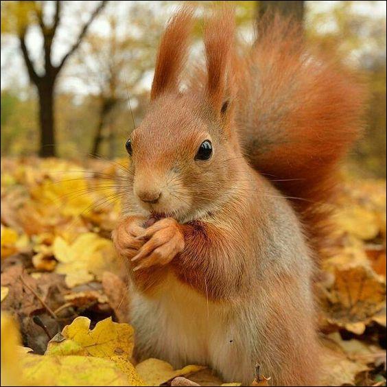 L'écureuil est-il un animal propre ?