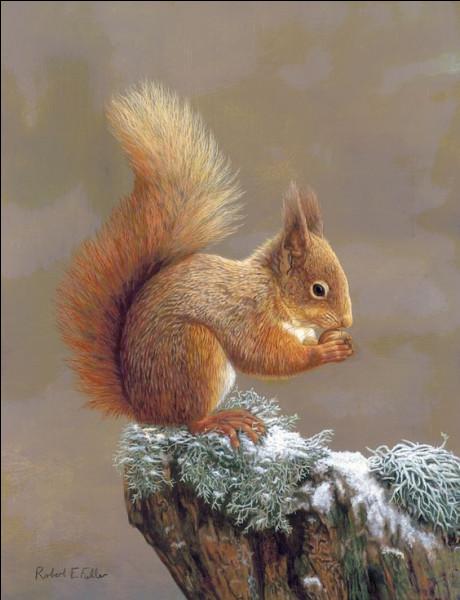 À quelle famille appartiennent les écureuils roux ?
