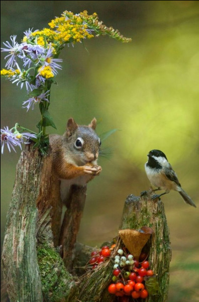 Question bonus : où peut-on voir des écureuils ?
