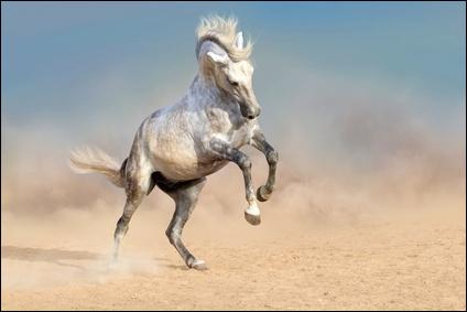 Les chevaux ne peuvent pas vomir, pourquoi ?