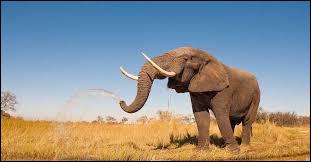 Un éléphant pèse le poids..