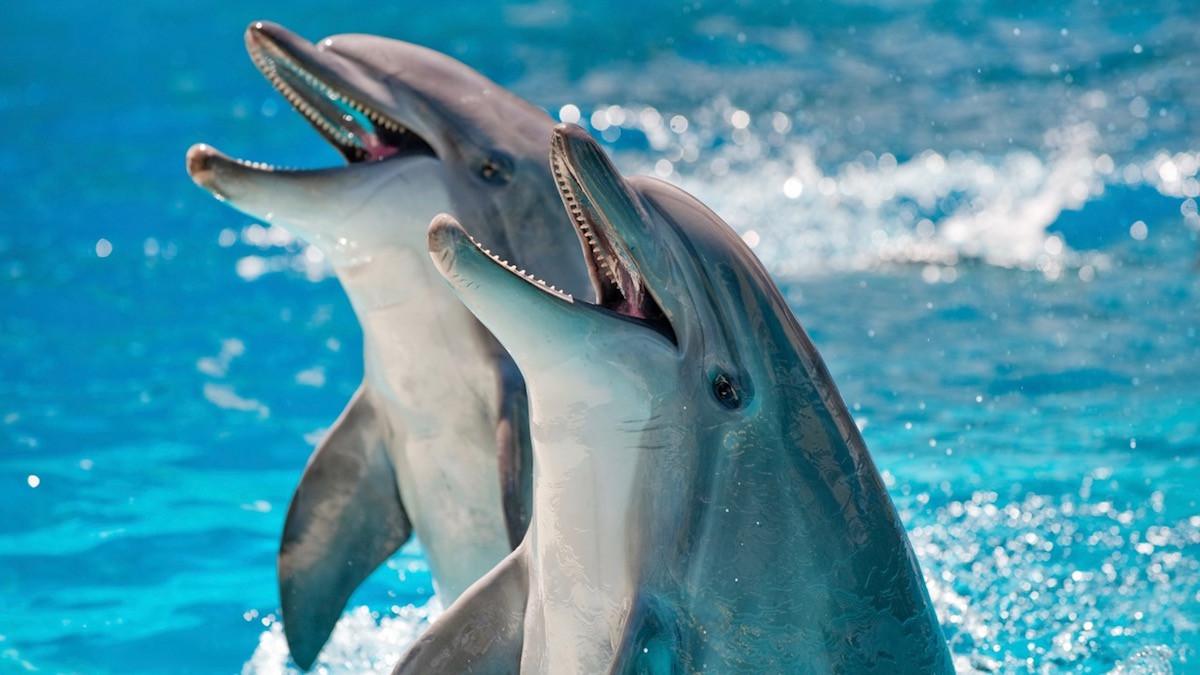 Les animaux des mers et océans