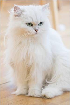 Quizz sur les races de chats
