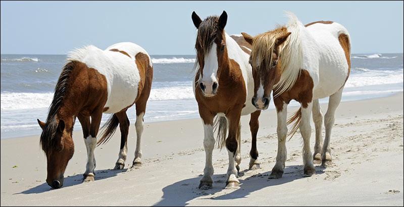 Si je te montre cette photo, tu me diras que le cheval du milieu...