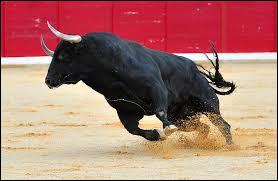 La couleur rouge énerve les taureaux !