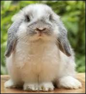 Les lapins sont des rongeurs !