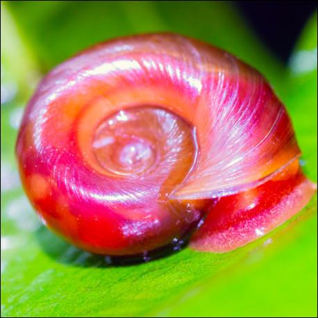 Quel est le rôle des escargots en aquarium ?