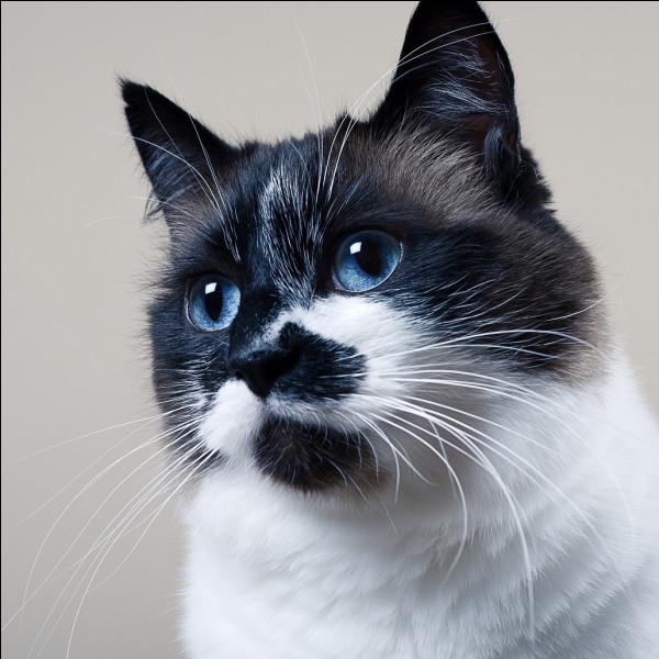 Combien pèse un chat en moyenne ?