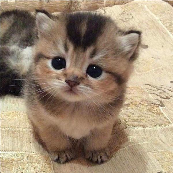 Commet appelle-t-on le cri du chat ?